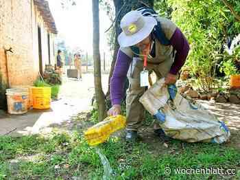 Dengue: Brasilien an erster Stelle in Amerika, Paraguay folgt - Das Wochenblatt aus Paraguay