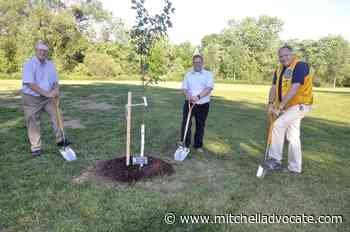 Maple tree plantings by MP mark Canada Day - Mitchell Advocate