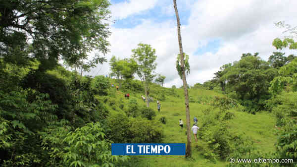 Excombatientes de ETCR en Ituango, Antioquia, irán a Mutatá este mes - El Tiempo