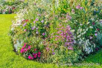 10 Blumen, die im Juli noch gesät werden können - Regenbogen