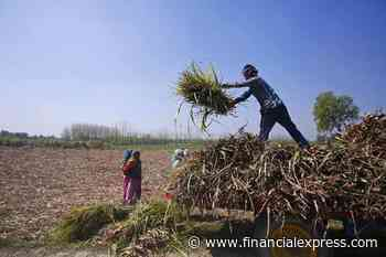 Kharif sowing 88% higher than last year; here's why this season is faring better than last one