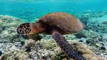 Boom di tartarughe marine in Sicilia, altri due nidi tra Ragusa e Siracusa - Giornale di Sicilia