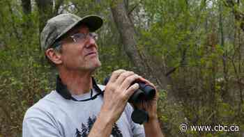 Birding during the pandemic: Basics for beginner birdwatchers in Manitoba