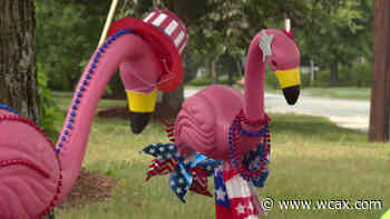 Flamingos flocking to Hanover, New Hampshire - WCAX