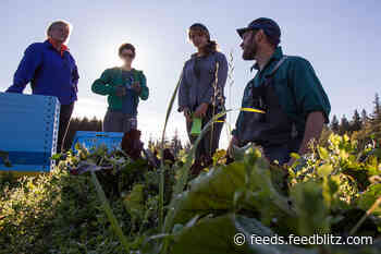 A Dozen Local Food Heroes on What a Pandemic Teaches (in News)