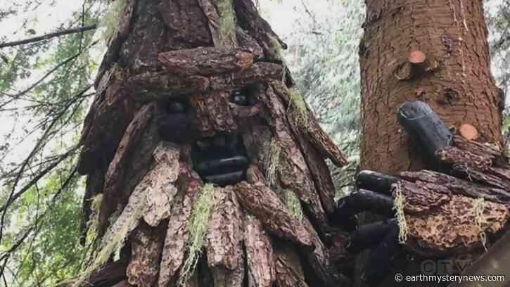 Search for Bigfoot in Sooke leads to discovery of multiple Sasquatch statues