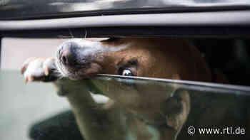 Hund aus Unterfranken jault gefühlte Ewigkeit in heißem Auto - dem Herrchen ist's egal - RTL Online