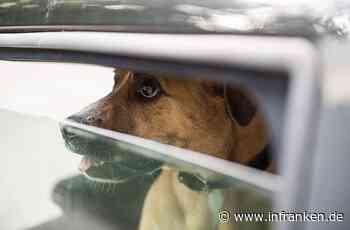Gerolzhofen: Hund zwei Stunden im heißen Auto eingesperrt - Herrchen schockiert mit Ansage - inFranken.de