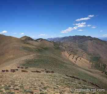 Watch: Wild horses on the Great Basin Trail in the Diamond Range in Nevada