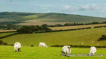A good walk: Rodmell and Harvey's Cross, East Sussex - The Times