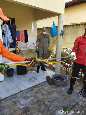 Morador encontra cobra na cozinha de casa em Piripiri e aciona Corpo de Bombeiros - G1