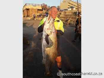 Herald Fishing: Cob, cod, carp and a 'tar road' of sardines - South Coast Herald