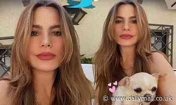 Sofia Vergara radiates a natural beauty as she poses with beloved pup Baguette in Instagram snap - Daily Mail