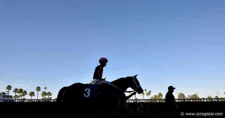 Racehorse euthanized after suffering injury at Los Alamitos