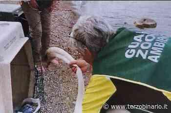 Fare Ambiente Bracciano lancia il primo corso da allievi guardie zoofile - TerzoBinario.it