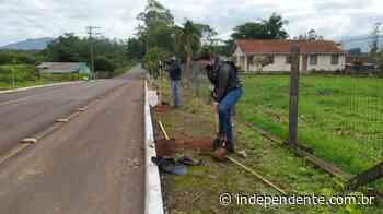 Projeto Lajeado mais Verde realiza o plantio de 21 mudas de Ipê amarelo - independente