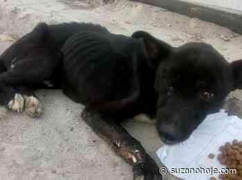 Cãozinho de Suzano resgatado por ONG necessita de doações para receber prótese - Suzano Hoje