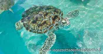 Tartaruga in difficoltà perde uova in mare: visitata nel centro di Manfredonia - La Gazzetta del Mezzogiorno