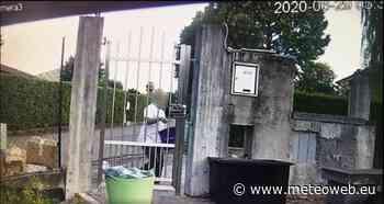 Donna ripresa mentre getta via due gattini: i micetti erano stati chiusi vivi in un sacchetto di carta [VIDEO] - Meteo Web