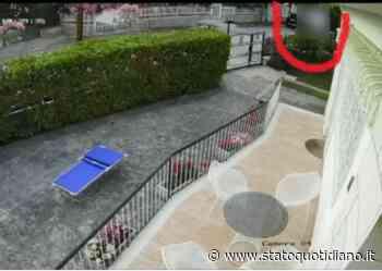 Manfredonia, con il cane in braccio lo alza e lo abbandona in una villa a Siponto - StatoQuotidiano.it