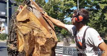 Monterotondo, gli alberi tagliati diventano delle opere d'arte - Corriere di Rieti