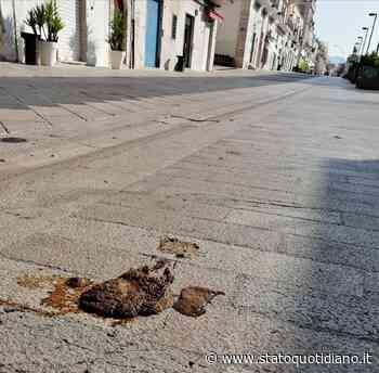 Manfredonia. Il rischio di schiacciare 'merda' è più alto in Corso Manfredi e Villa che in periferia - StatoQuotidiano.it