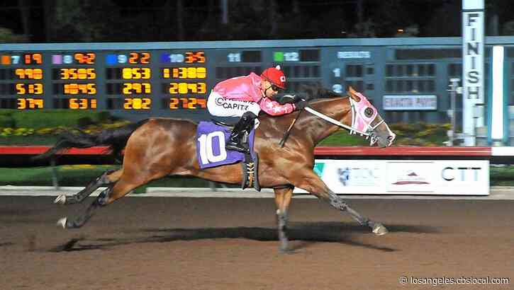 Another Race Horse From Los Alamitos Race Course Has Been Euthanized