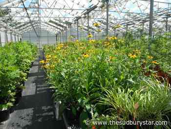 The Cullens: Show some enthusiasm for native plants
