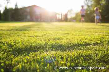 Follow these tips to create a beautiful backyard - Cape Breton Post