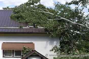 Storm buries house, yard in trees - Nipawin Journal