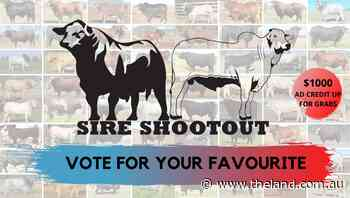 Vote for your favorite in Sire Shootout