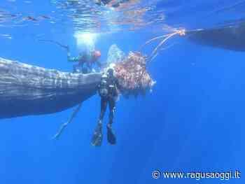 Un capodoglio intrappolato in una rete da pesca illegale a Lipari: liberato - RagusaOggi