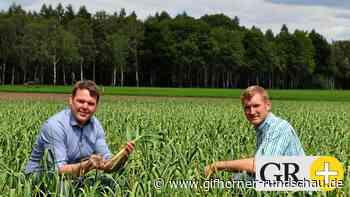 Im Kreis Gifhorn wird Heide-Knoblauch angebaut - Gifhorner Rundschau