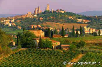 Venraccia di San Gimignano, il Consorzio saluta Campatelli e rivoluziona marketing e comunicazione - Agricultura.it