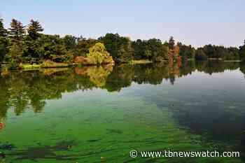 Reports of Blue-Green Algae in Dryden, Kenora lakes - Tbnewswatch.com