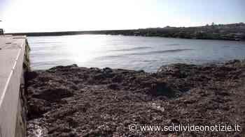 """Scicli, """"Imminente l'inizio dei lavori di rimozione delle alghe dal porticciolo di Donnalucata"""" - Scicli Video Notizie"""