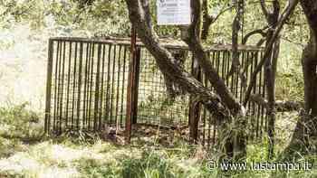 Albissola Marina, cinghiale catturato e abbattuto: proteste dell'Enpa - La Stampa