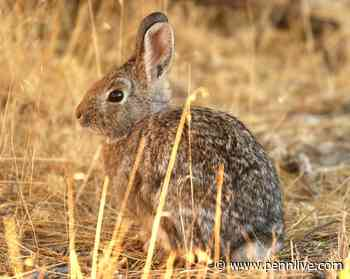 'Bunny Ebola' is spreading in the United States: reports - PennLive