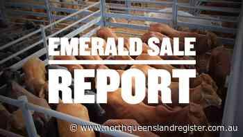 Feeder steers reach 384c, average 351c at Emerald - North Queensland Register