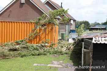 Grote boom valt op container, Blijverpolder Rijpwetering - Hardnieuws