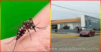 Insoportable plaga de moscos en Cerro Azul - Vanguardia de Veracruz