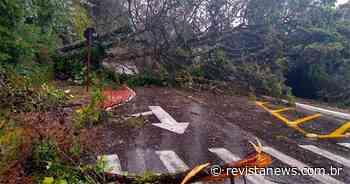Defesa Civil de Gramado acompanha os estragos do ciclone - Revista News