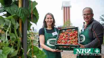 Laga in Kamp-Lintfort: So klappt es mit eigenen Erdbeeren - NRZ