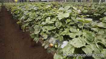 Fruticultura do Paraná ganha força com apoio do Estado - Folha De Cianorte
