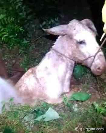 Jegue é resgatado após cair em fossa de propriedade rural em Ibitinga; veja o vídeo - G1