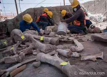 Mamuts de Tultepec y Santa Lucía, servirán para reescribir la historia - La Silla Rota