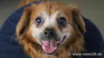 Hund macht Tierheim Peine Sorgen: Doch dann geschieht das Wunder - News38