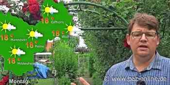 Das Wettervideo für Peine vom 6. bis 10. Juli 2020 - Ein wahrer Gemischtwarenladen - Peiner Allgemeine Zeitung - PAZ-online.de