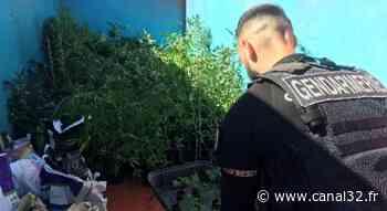 Troyes : dans un magasin de jardinage, plus de 320 pieds de cannabis dissimulés - Canal 32