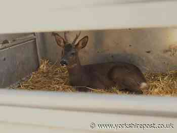 Channel 5's This Week On The Farm shows Cannon Hall's M1 Barnsley deer rescue - Yorkshire Post